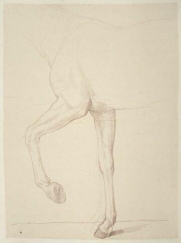 Cheval, vu du garrot au dos et jambes antérieures, de profil