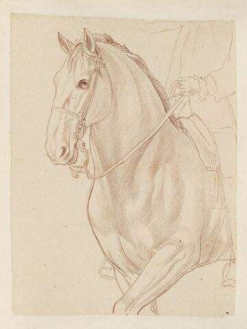 Partie antérieure d'un cheval jusqu'aux avant-bras et indication du cavalier, vus de trois quarts vers la gauche