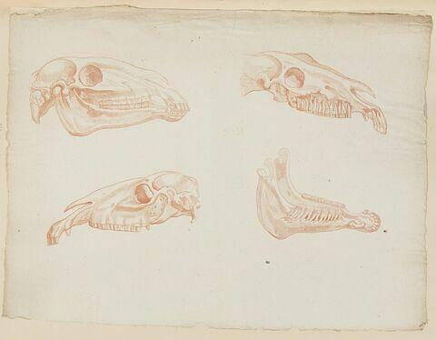 Trois éléments de crâne et une mâchoire de cheval
