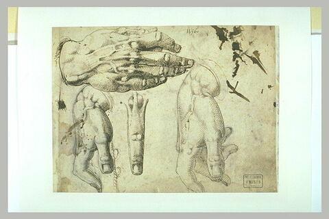Trois études de mains, et un doigt