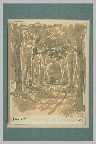 Une allée sous bois