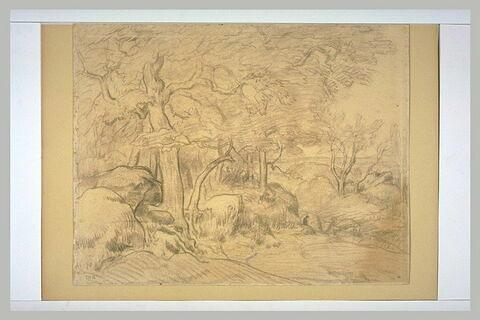 Fontainebleau, le chêne brisé