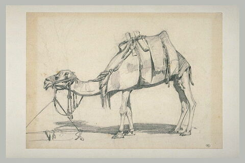 Etude d'un chameau