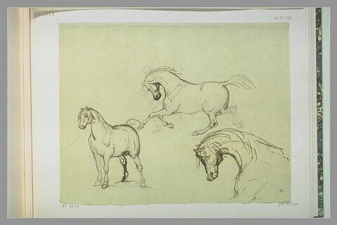 Etudes de chevaux