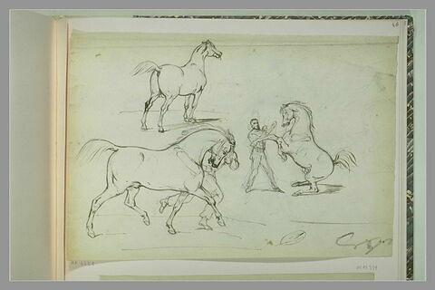 Etudes de chevaux et d'un dresseur