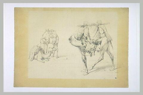 Trois dromadaires, dont l'un se mord la jambe gauche arrière