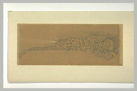 Un jaguar allongé mangeant