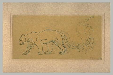Etude pour une panthère, se dirigeant vers la gauche ; cerf attaqué à la gorge par uin félin
