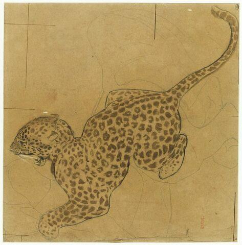 Jaguar bondissant vers la gauche, la gueule ouverte