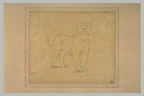 Une lionne debout