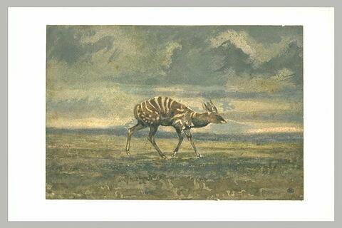 Antilope debout, de profil vers la droite