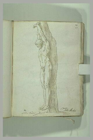 Marsyas suspendu à un arbre, les bras liés