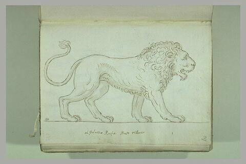 Lion vu de profil, tourné vers la droite