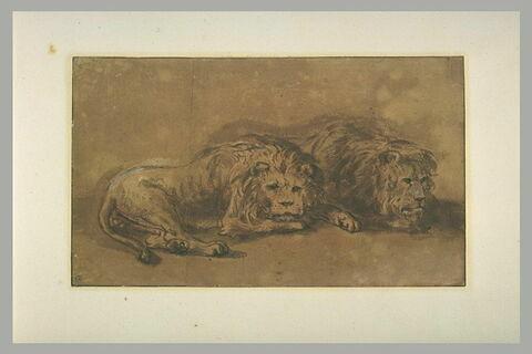 Deux lions couchés, côte à côte, tournés vers la droite