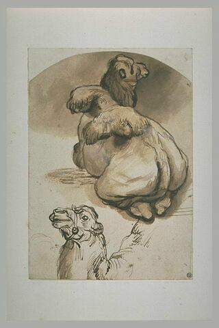 Etude d'un chameau aux bosses tombantes, couché, et de la tête d'un autre