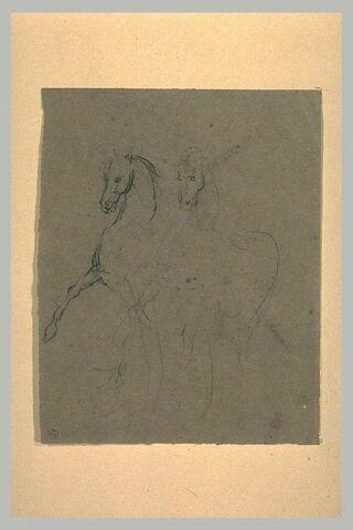Deux croquis d'un cheval dressé, en liberté