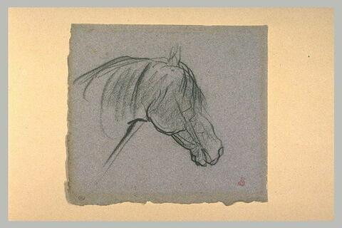 Tête de cheval bridé
