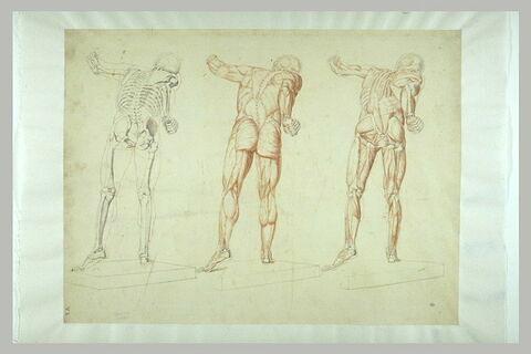 Trois études d'anatomie et de myologie, d'après le Gladiateur Borghèse...