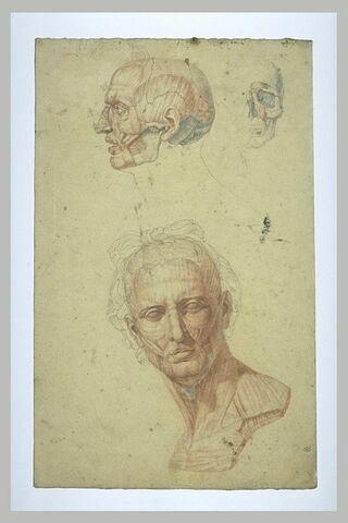 Trois études anatomiques de têtes, une étude d'ostéologie et deux études...