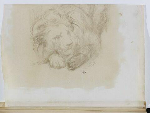 Lion accroupi