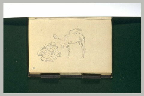 Dromadaire ; figure accroupie