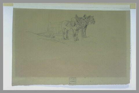 Deux chevaux attelés à une charrue