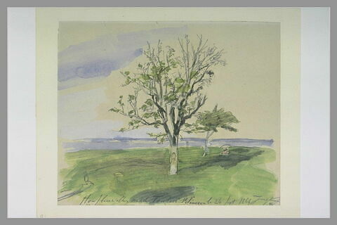 A Honfleur, jardin avec deux arbres fruitiers, au bord de la mer
