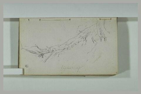 Un arbre couché, mort à Ludonchamps