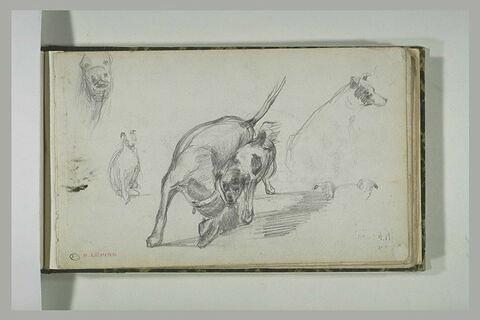 Etudes de chiens et d'une tête d'un autre animal