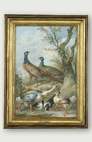 Oiseaux divers, dont un couple de faisans