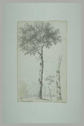 Arbres au bois de Boulogne