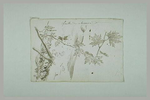 Feuilles de chêne et branches