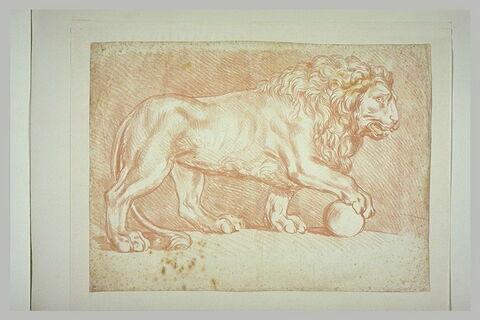Lion posant sa patte sur une boule, de profil