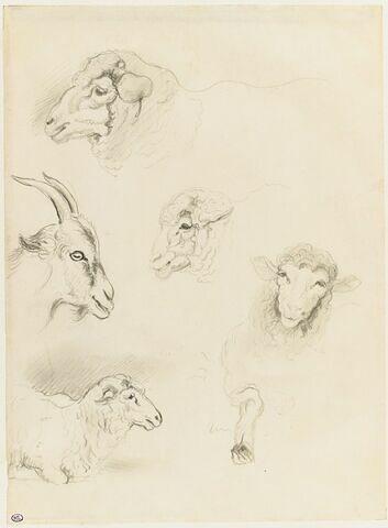 Têtes de chèvre, et de moutons