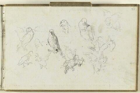Divers croquis de perroquets