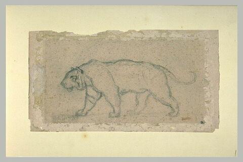 Lionne debout, de profil vers la gauche