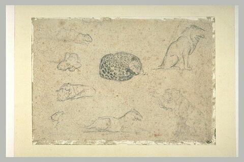 Panthère et autres félins