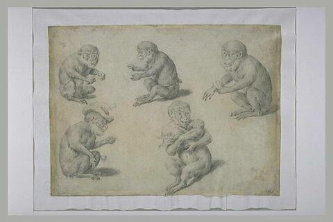 Cinq études de singe