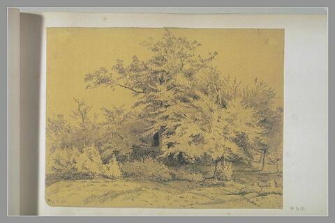 Etudes d'arbres et de bosquet