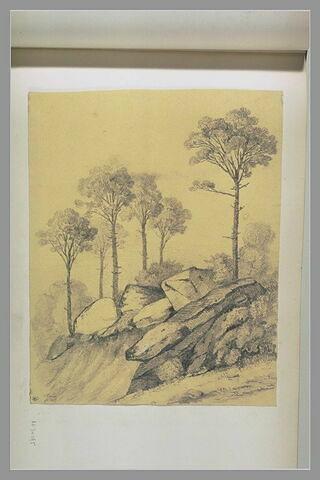 Paysage avec de grands pins et des rochers