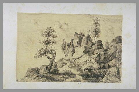Une chèvre sur un chemin bordé de rochers et de chênes