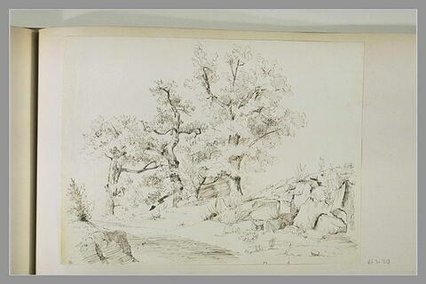 Chemin, arbres et rochers