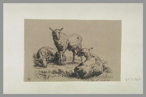 Trois moutons
