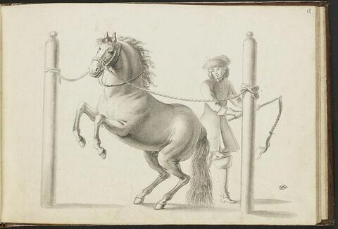 Cheval dressé par un cavalier