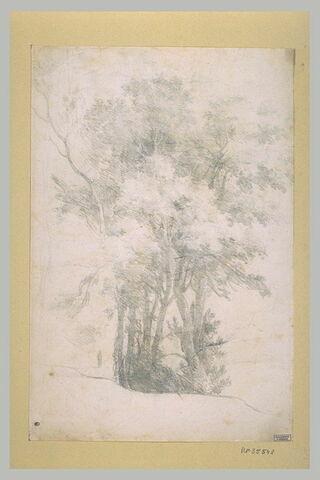 Groupe de grands arbres au feuillage épais