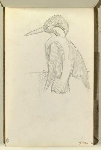 Etude d'un oiseau sur un perchoir