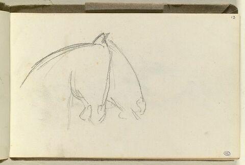 Têtes de chevaux vues de profil vers la droite