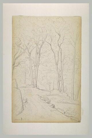 Route parmi les arbres