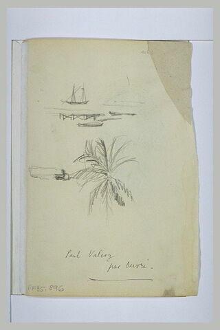 Bateaux et palmier