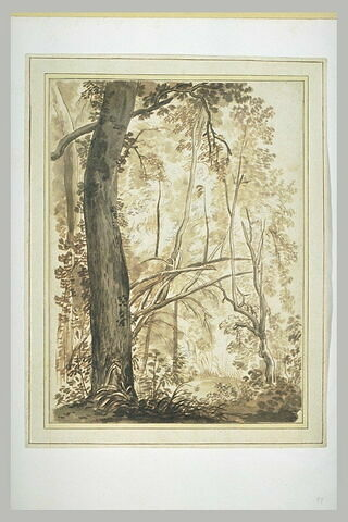 Intérieur d'un bois